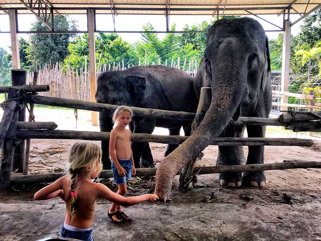 things to do in Chiang Rai with children - visit elephants farm