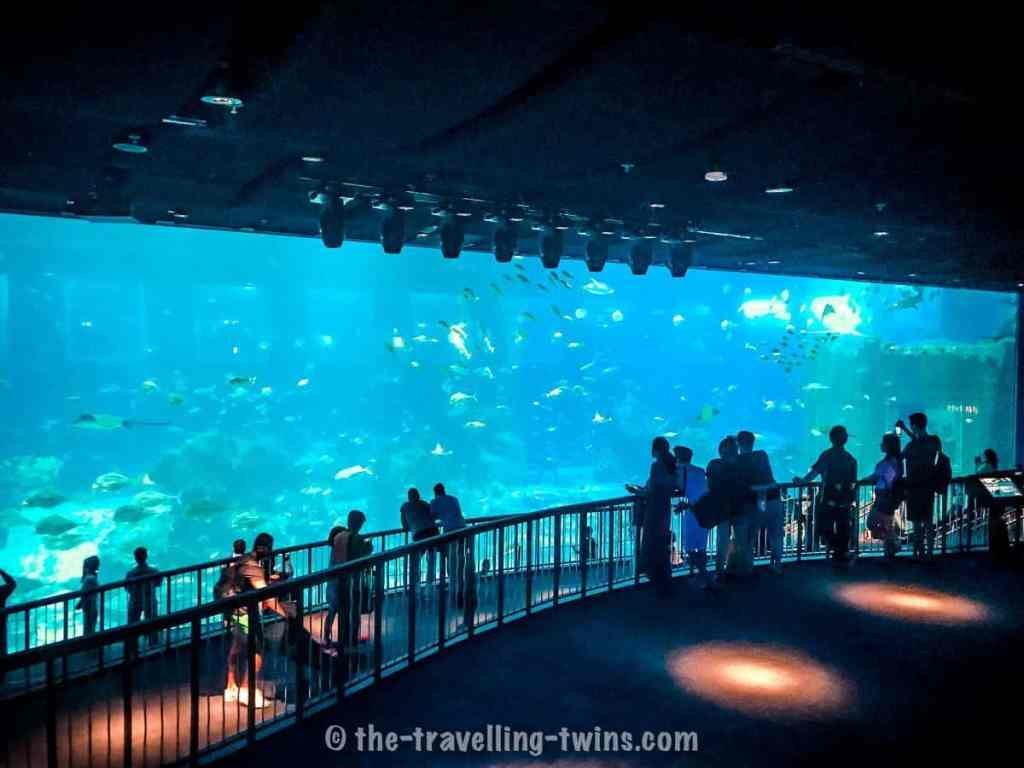 one of the place to visit in Singapore with kids is S.E.A Aquarium on Sentosa Island