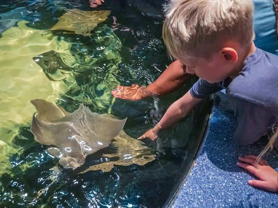 sting rays, rays worlds aquariums