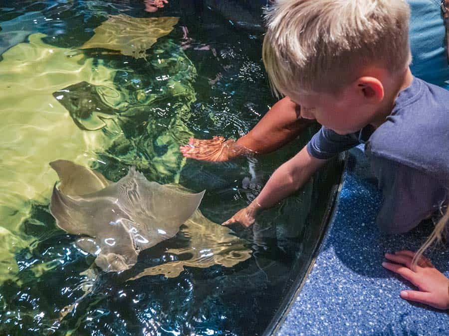 sting rays, rays worlds aquariums