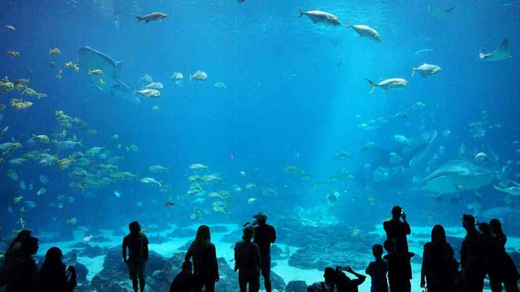 marine life in best aquariums in the world,