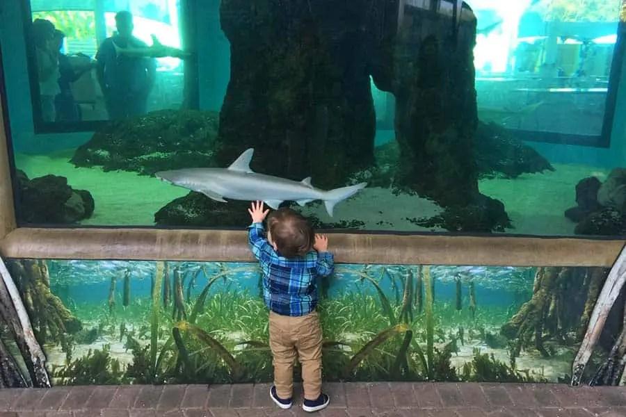 kid in aquarium