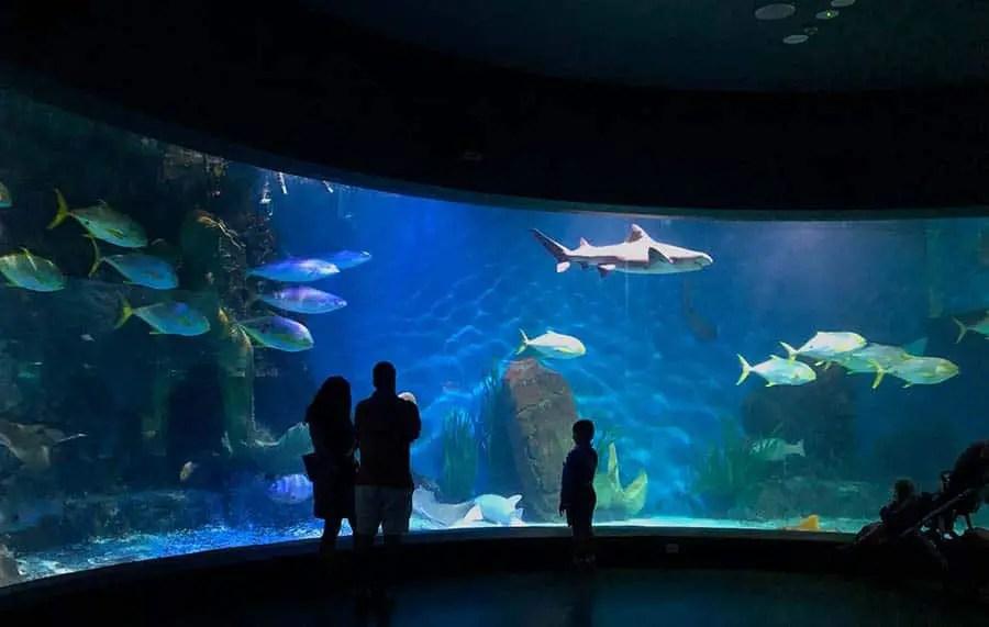 best aquariums in the world, best aquariums in the world, best aquariums in the world, best aquariums in the world aquarium, ocean, best aquariums in the world, best aquariums in the world, best aquariums in the world