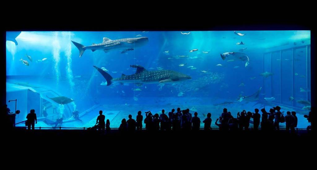 whale sharks, sharks and rays in Best Aquariums in the World