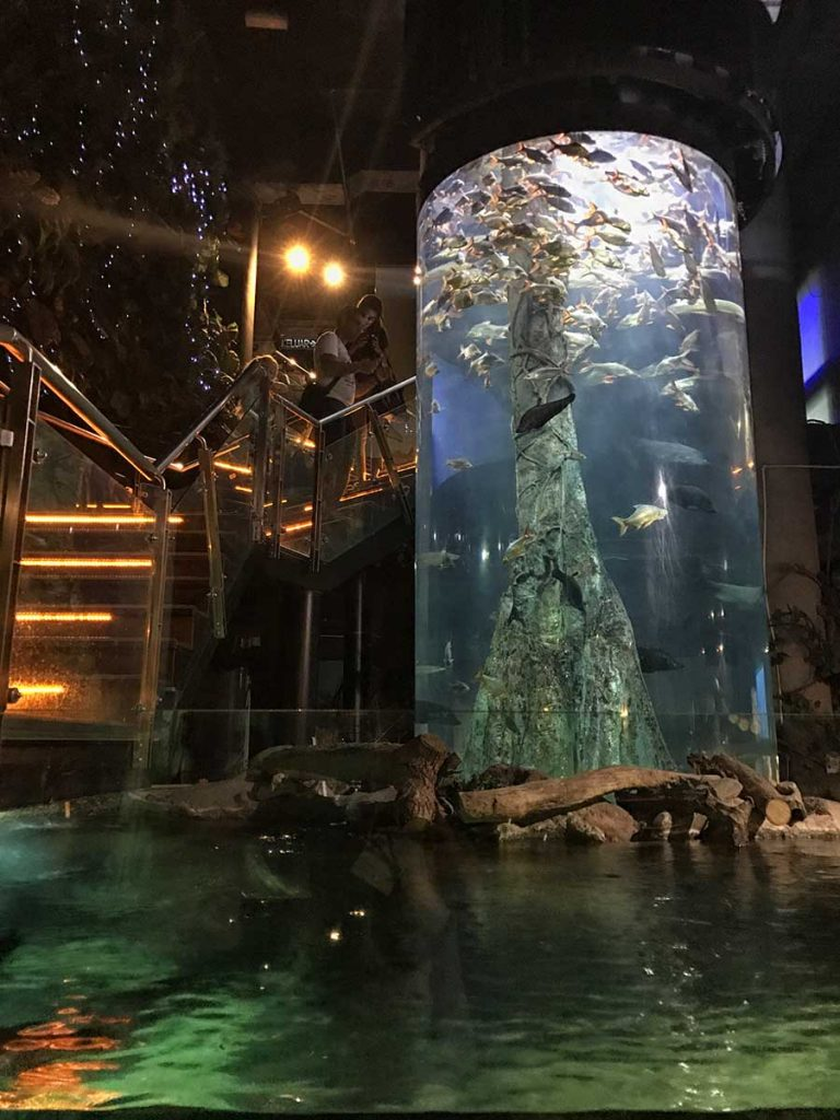 Plus Grand Aquarium De France : grand, aquarium, france, Largest, Aquariums, World, Listed, Bloggers