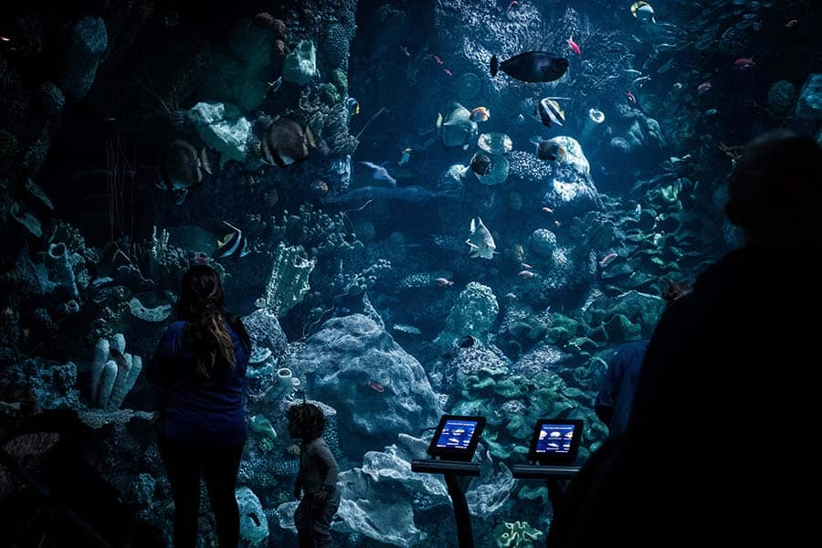 10 million galons aquarium - chicago best aquariums in the world