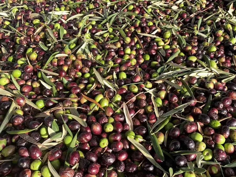 Olives traditional greek food