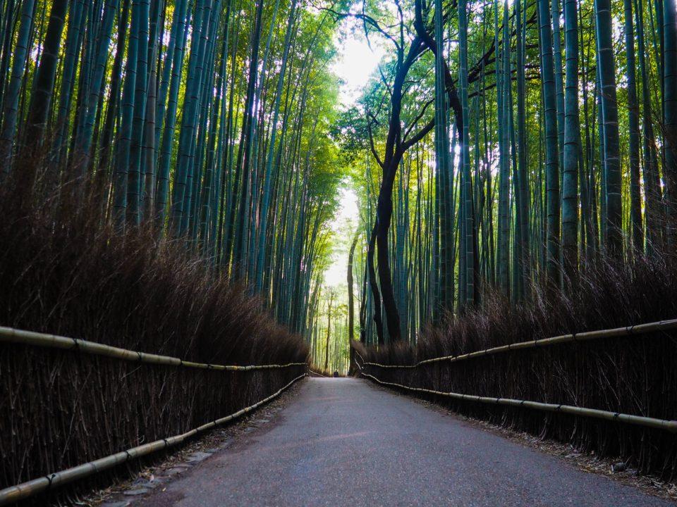 Japan-Kyoto-Bambuswald