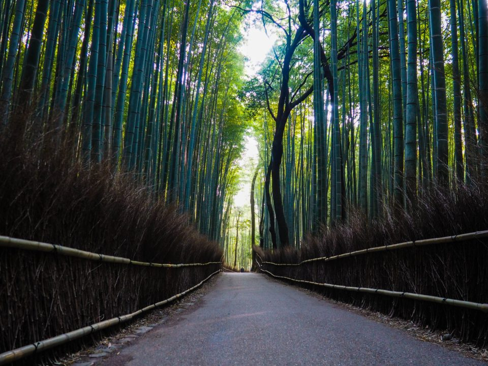 Kyoto Must See Bambuswald Arashiyama The Travelogue