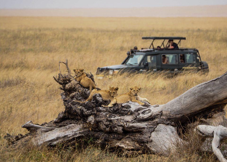 Tansania-Serengeti-Safari