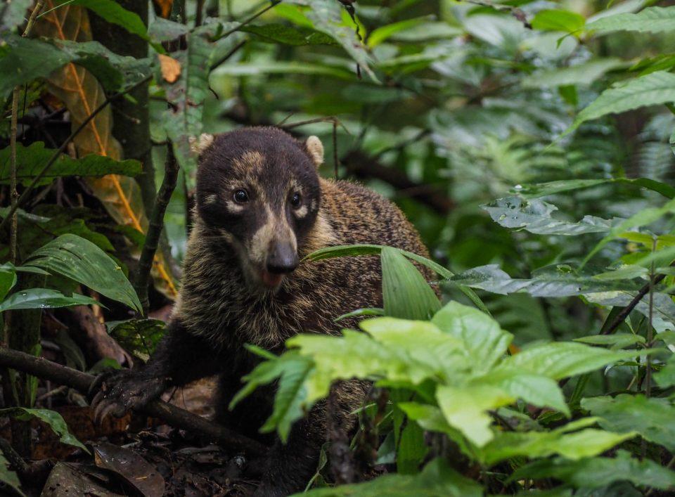 Panama-Soberania-Nationalpark-wandern