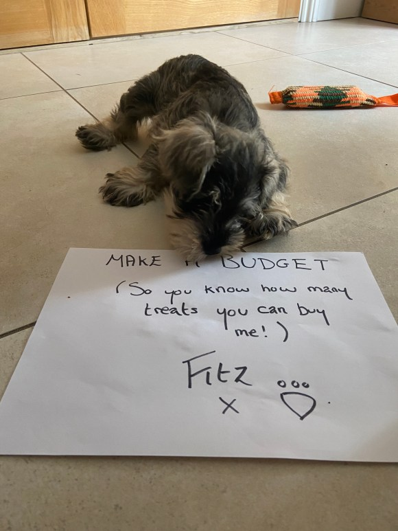 Another top financial tip from the puppy. He suggests making a budget.