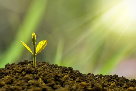 Is it possible to invest ethically? A green shoot sprouts from a pile of rubble, with the sun shining down on it.