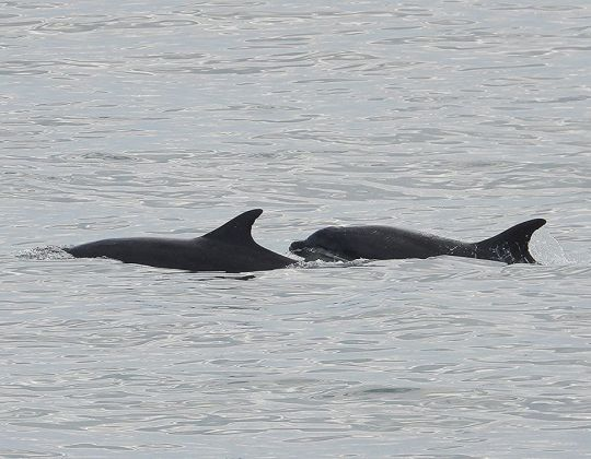 Bottlenose Dolphins Spotted In Scarborough As Brits Continue To Stay Indoors
