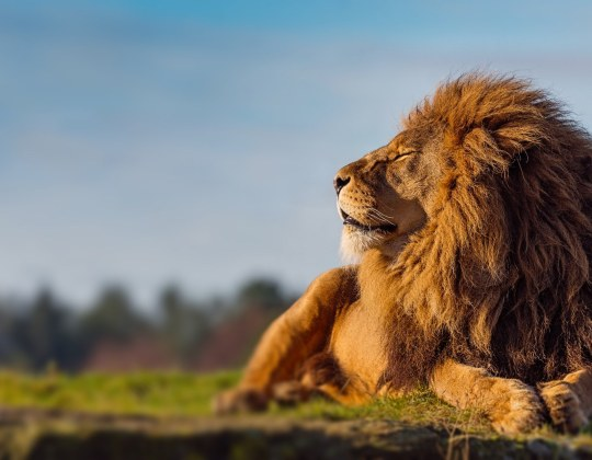 Yorkshire Wildlife Park Has Revealed Its Plans To Re-Open, But Tickets Are Limited