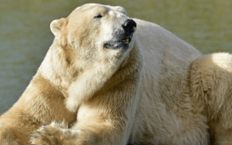The UK's Oldest Polar Bear Has Passed Away At Its Home, Yorkshire Wildlife Park