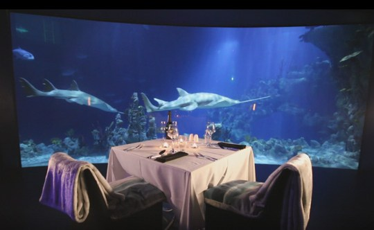 You Can Now Have A Private Date Night With Sharks At This Yorkshire Aquarium