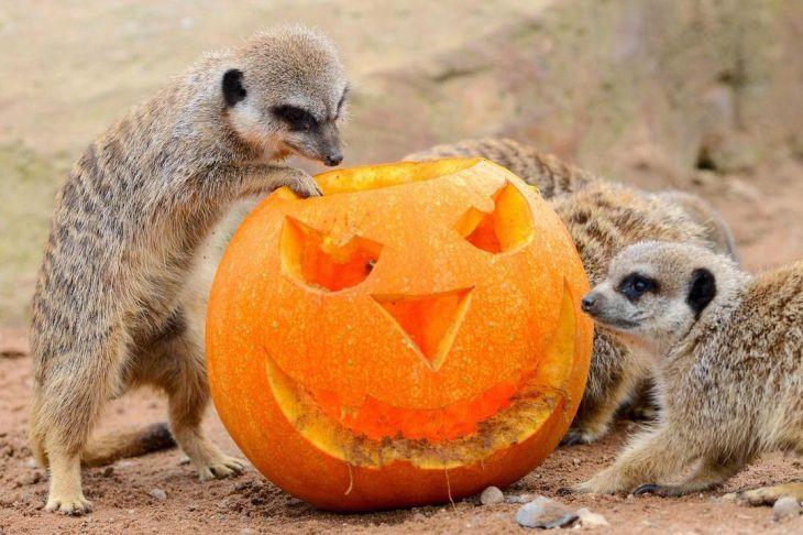 Yorkshire Wildlife Park Halloween 2021