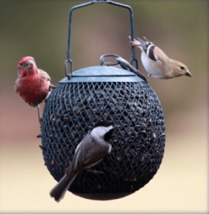 black, ball style bird feeder with 3 birds clinging: a red and brown bird, a brown bird with black stripes on wings, and a dark gray bird with white neck