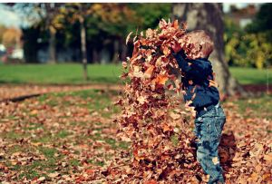 toddler boy, wearing jeans and navy blue sweatshirt, tossing up fall leaves that obscure his face