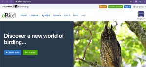 Screen shot of Cornell lab of ornithology, with photo of great horned owl in tree with bright green leaves all around