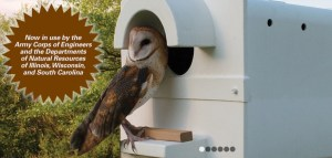 barn owl on perch in front of a barn owl box, with brown burst and text