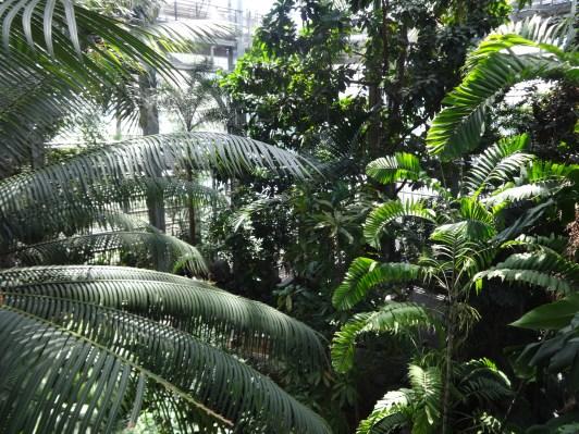 The Tropics, 29 Juni 2016