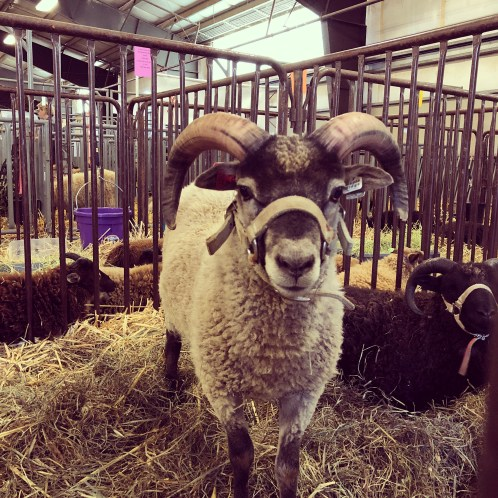 Wool Breed Study - Individual Fibers