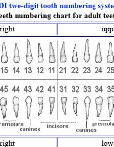 Fdi charting dental also denmarpulsar rh