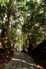 鬱蒼とした樹齢何百年という老杉の間を進む
