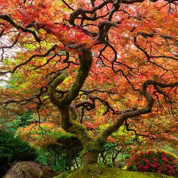 Ten-of-The-Most-Incredible-and-Inspiring-Trees-In-The-World