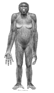 An artist's rendition of Ardipithecus ramidus
