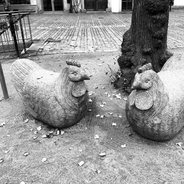 Wood hens