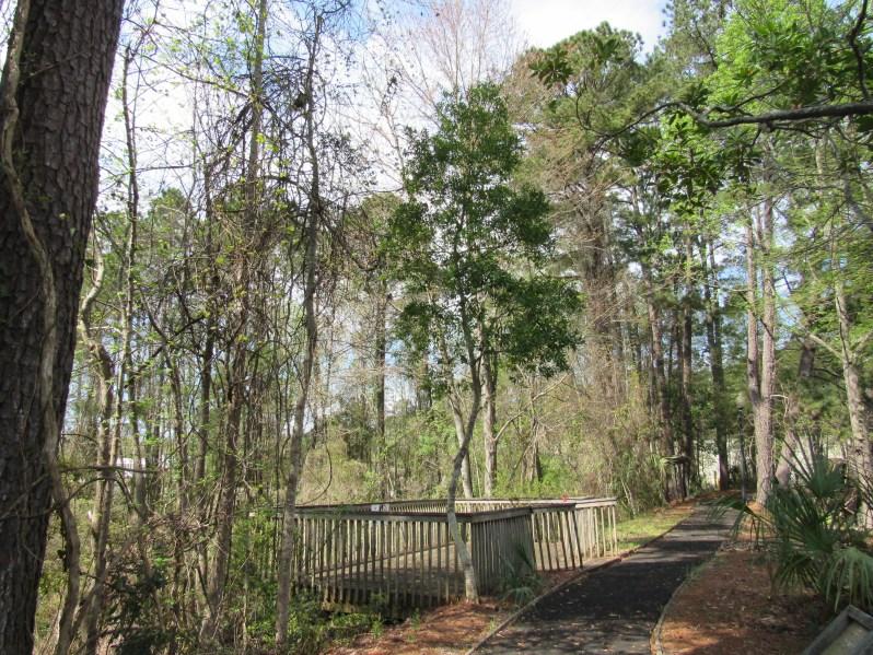 Deck overlooking wetland