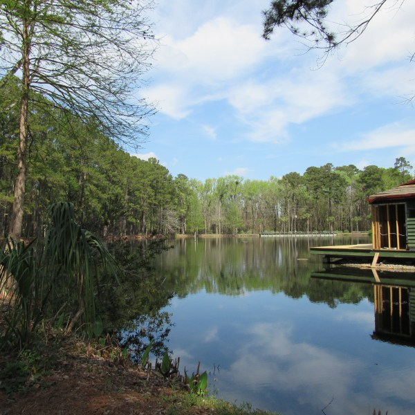 Pond and nature park