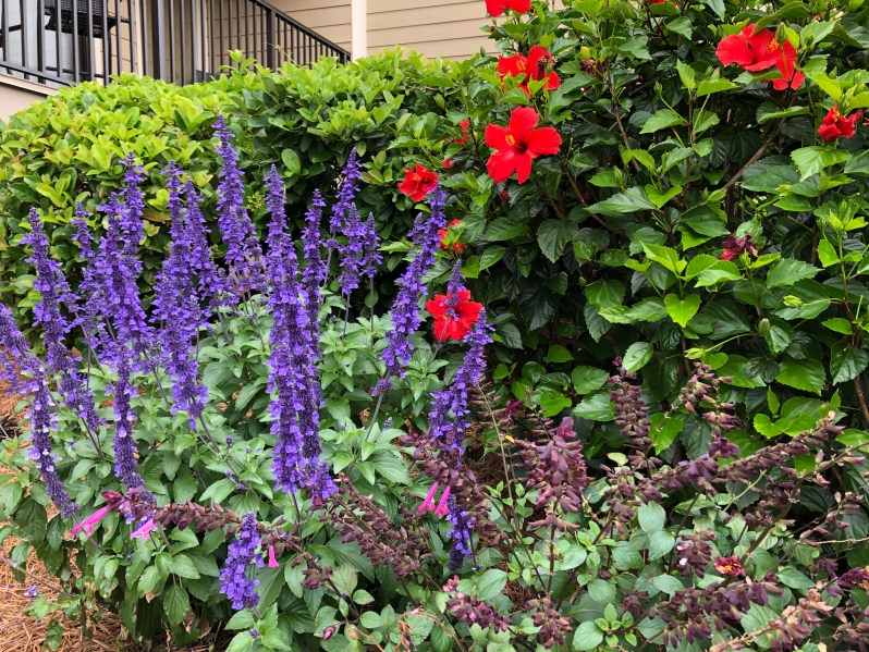Flowers and shrubs