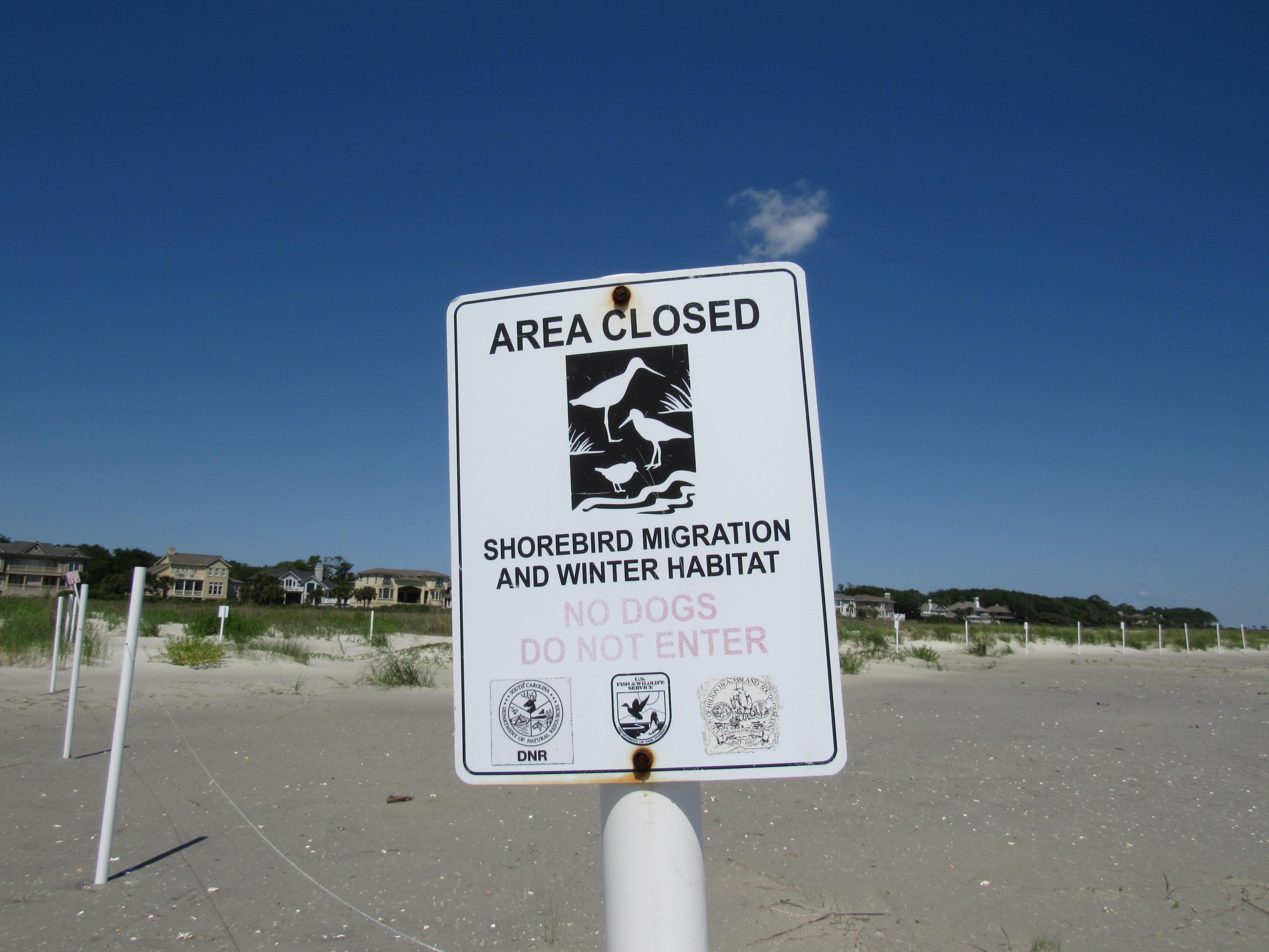Shorebird migration area