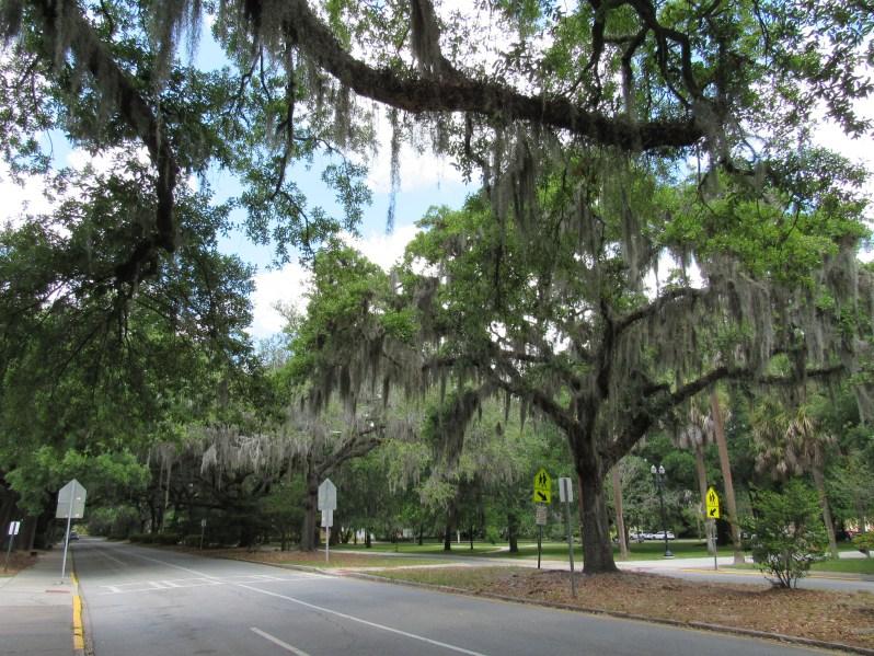 Washington Street Savannah