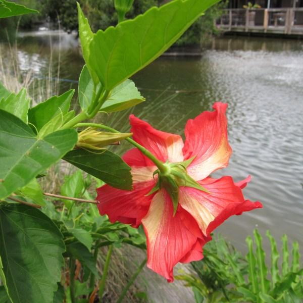 Back side of a flower
