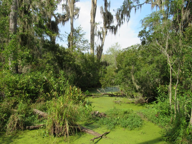 Cay Creek wetlands