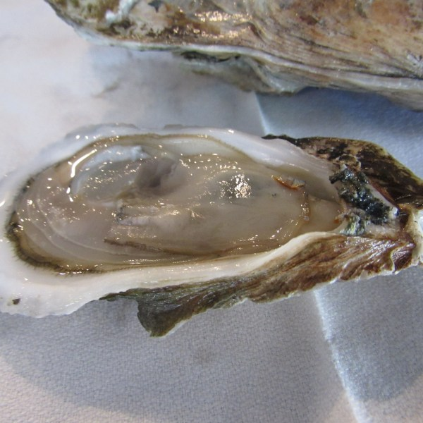 May River Oysters