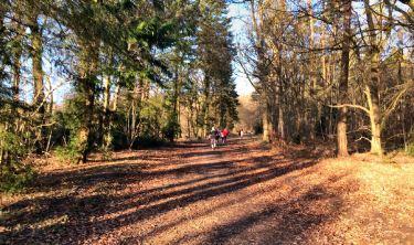 Wendover Woods parkrun