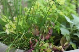 DSLR Patio Herbs