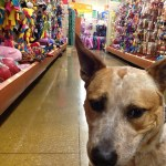 Pet store product managers are searching for ways to make their stores profitable