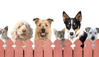 Animal Welfare League Pubcrawl