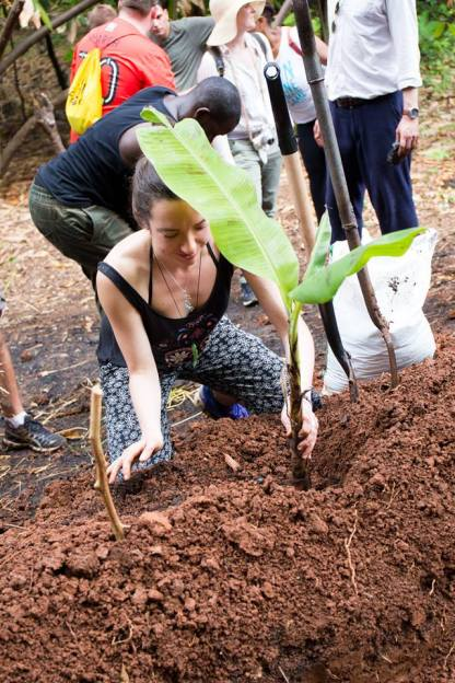 Planting the banana tree baby