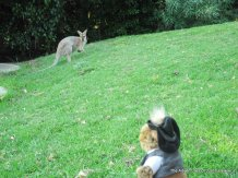 old man roo checking out the competition