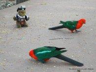 king parrots enjoying a seedy feast