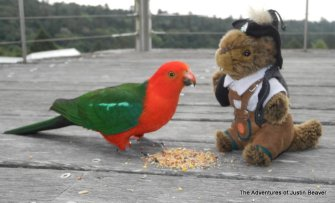sharing lunch with a king parrot