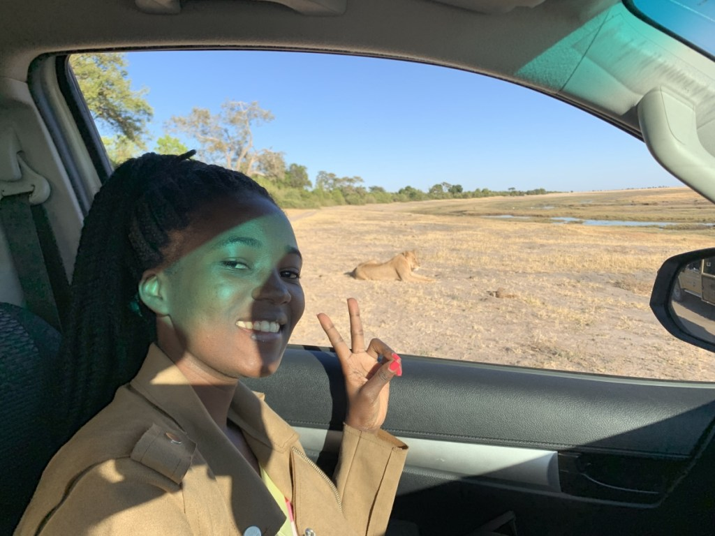 Seeing a lion upclose in chobe national park botswana